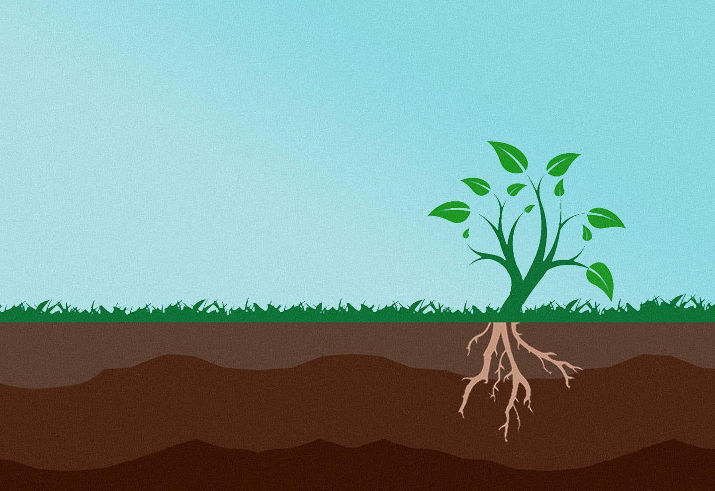 Soil Renew branding strategy